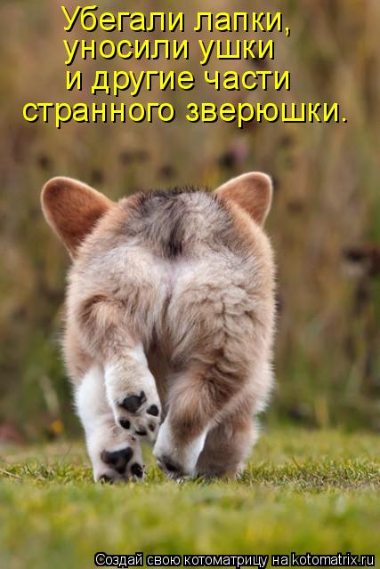 Котоматрица: Убегали лапки,  уносили ушки и другие части странного зверюшки.