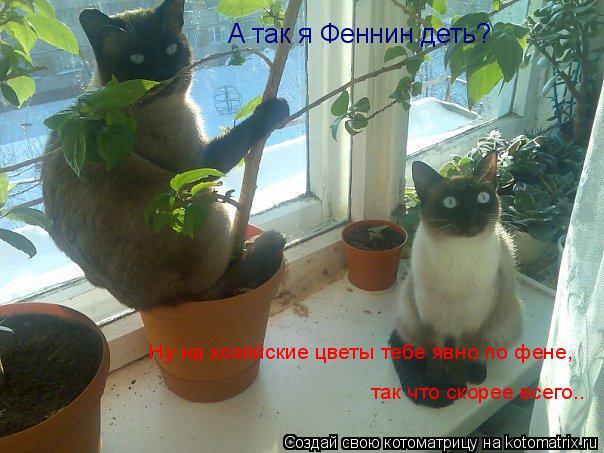 Котоматрица: А так я Феннин деть? Ну на хозяйские цветы тебе явно по фене, так что скорее всего..