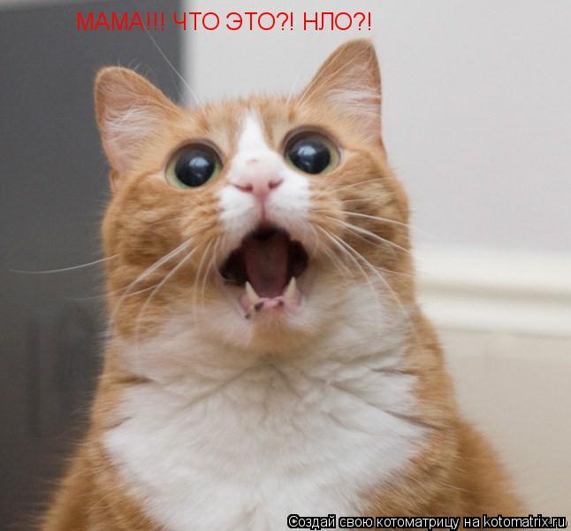 Котоматрица: МАМА!!! ЧТО ЭТО?! НЛО?!