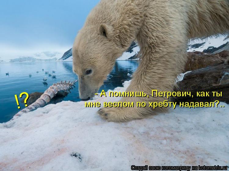Котоматрица: - А помнишь, Петрович, как ты мне веслом по хребту надавал?.. !?