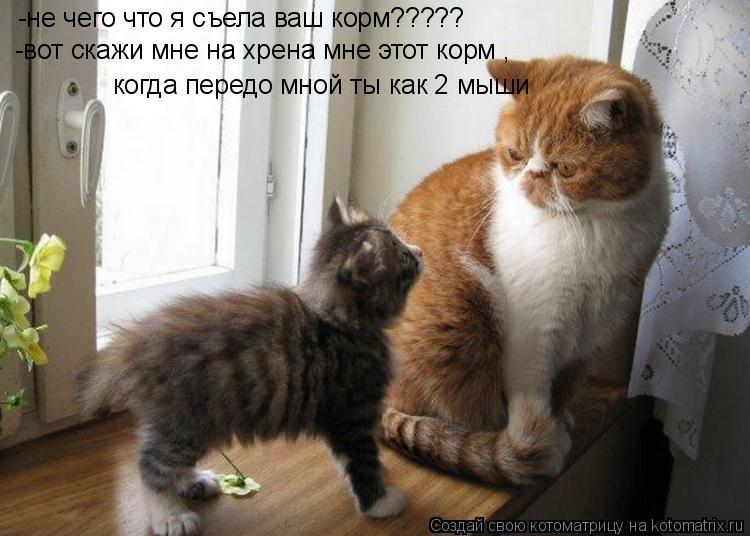 Котоматрица: -не чего что я съела ваш корм????? -вот скажи мне на хрена мне этот корм ,  когда передо мной ты как 2 мыши