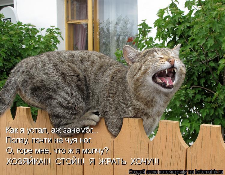 Котоматрица: Как я устал, аж занемог... Ползу, почти не чуя ног. О, горе мне, что ж я молчу? ХОЗЯЙКА!!!  СТОЙ!!!  Я  ЖРАТЬ  ХОЧУ!!!