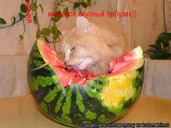 Котоматрица: мм какой вкусный арбузик)) мм какой вкусный арбузик))