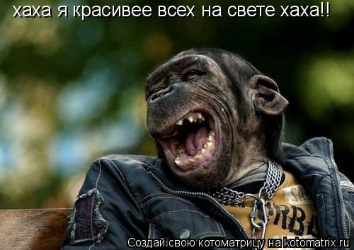Котоматрица: хаха я красивее всех на свете хаха!!