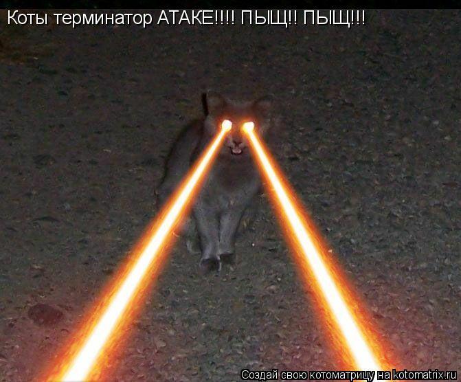 Котоматрица: Коты терминатор АТАКЕ!!!! ПЫЩ!! ПЫЩ!!!
