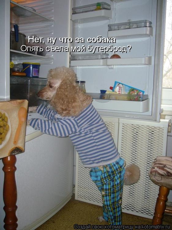 Котоматрица: Нет, ну что за собака  Опять съела мой бутерброд?