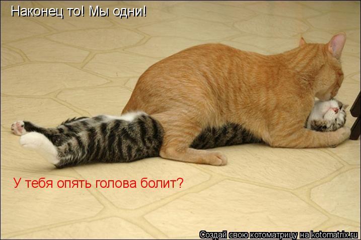 Котоматрица: Наконец то! Мы одни! У тебя опять голова болит?