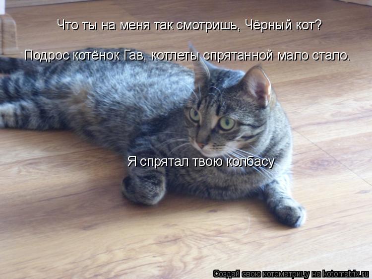 Котоматрица: Что ты на меня так смотришь, Чёрный кот? Подрос котёнок Гав, котлеты спрятанной мало стало. Я спрятал твою колбасу