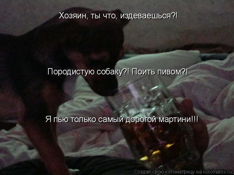 Котоматрица: Хозяин, ты что, издеваешься?! Породистую собаку?! Поить пивом?! Я пью только самый дорогой мартини!!!