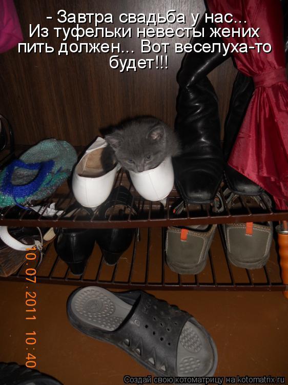 Котоматрица - - Завтра свадьба у нас... Из туфельки невесты жених пить должен... Вот
