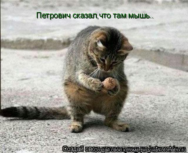 Котоматрица: Петрович сказал,что там мышь..
