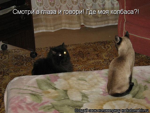 Котоматрица: Смотри в глаза и говори! Где моя колбаса?!