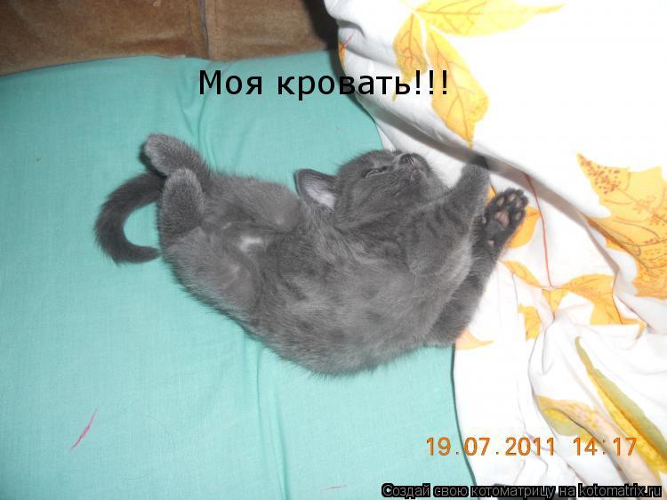 Котоматрица: Моя кровать!!!