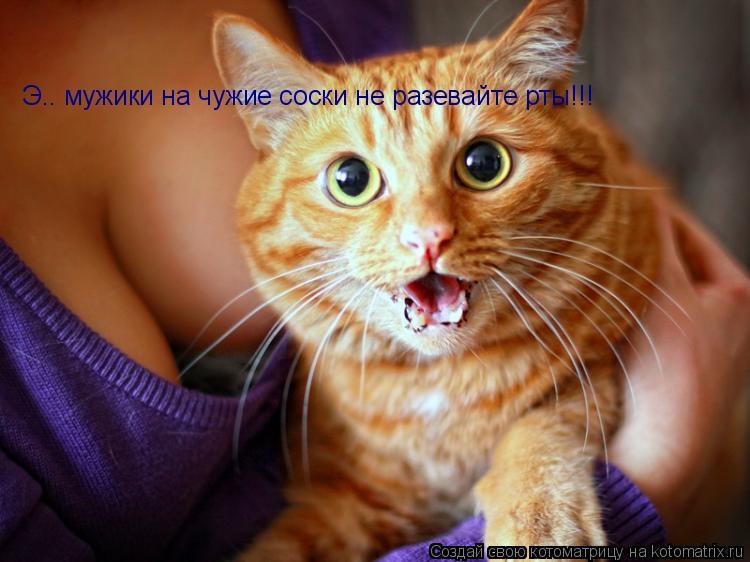 Котоматрица: Э.. мужики на чужие соски не разевайте рты!!!