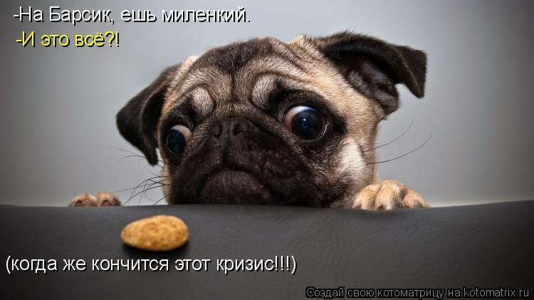 Котоматрица: -На Барсик, ешь миленкий.  -И это всё?! (когда же кончится этот кризис!!!)