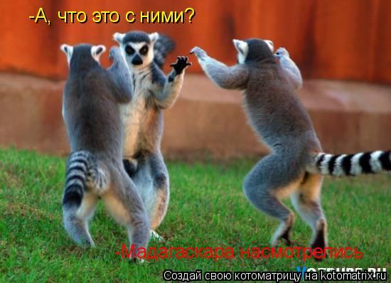 Котоматрица: -Мадагаскара насмотрелись  -А, что это с ними?