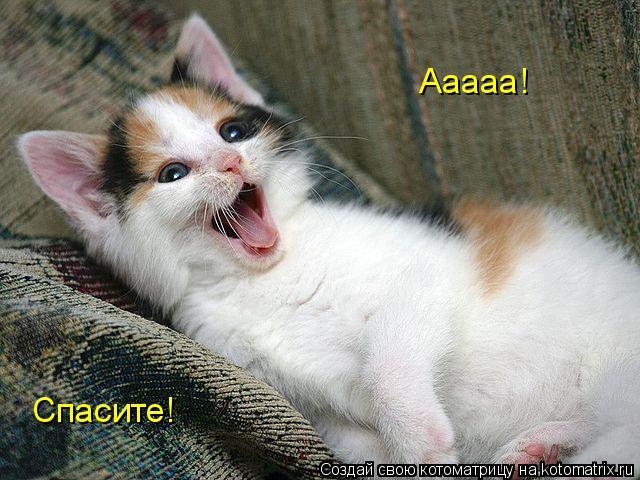 Котоматрица: Ааааа! Спасите!