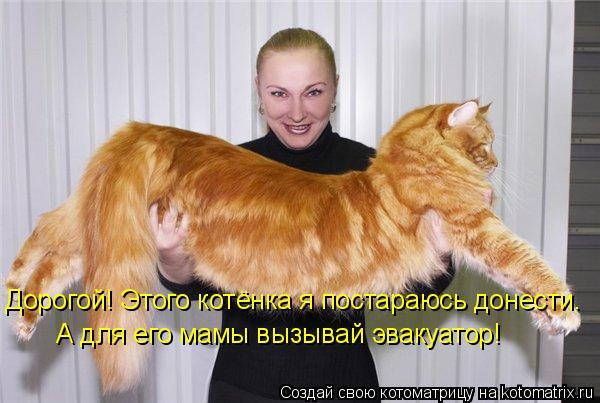 Котоматрица: Дорогой! Этого котёнка я постараюсь донести.  А для его мамы вызывай эвакуатор!