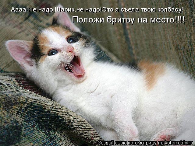 Котоматрица: Аааа!Не надо,Шарик,не надо!Это я съела твою колбасу! Положи бритву на место!!!!