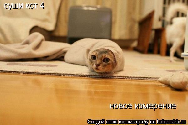 Котоматрица: суши кот 4 новое измерение