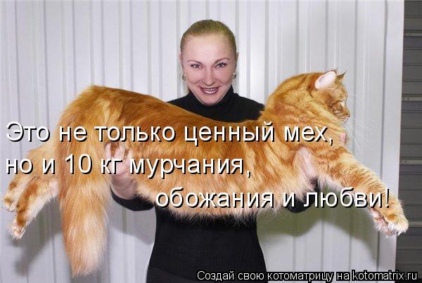 Котоматрица: Это не только ценный мех,  но и 10 кг мурчания,  обожания и любви!