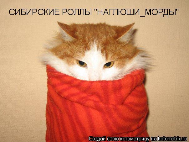 """Котоматрица: СИБИРСКИЕ РОЛЛЫ """"НАГЛЮШИ_МОРДЫ"""""""