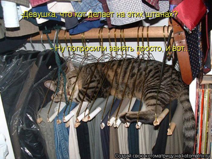 Котоматрица: -Девушка, что кот делает на этих штанах? - Ну попросили занять просто, и вот...
