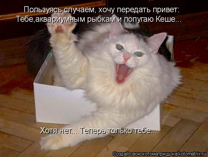 Котоматрица: Пользуясь случаем, хочу передать привет: Тебе,аквариумным рыбкам и попугаю Кеше... Хотя нет... Теперь только тебе...