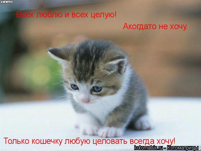 Котоматрица: Всех люблю и всех целую! Акогдато не хочу. Только кошечку любую целовать всегда хочу!