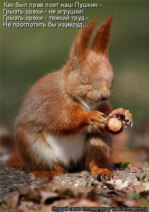 Котоматрица: Как был прав поэт наш Пушкин - Грызть орехи - не игрушки! Грызть орехи - тяжкий труд - Не проглотить бы изумруд...