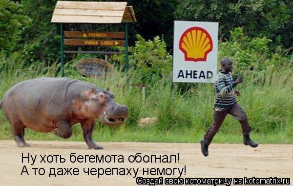Котоматрица: Ну хоть бегемота обогнал! А то даже черепаху немогу!