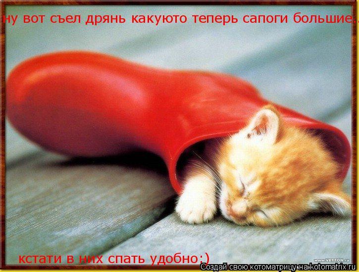 Котоматрица: ну вот съел дрянь какуюто теперь сапоги большие... кстати в них спать удобно:)