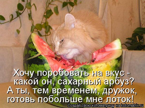 Котоматрица - Хочу поробовать на вкус - какой он, сахарный арбуз? А ты, тем временем