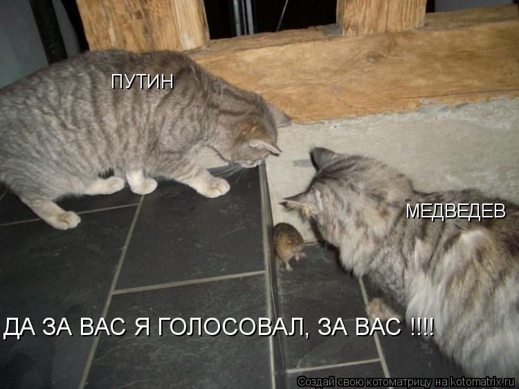 Котоматрица: ДА ЗА ВАС Я ГОЛОСОВАЛ, ЗА ВАС !!!! ПУТИН МЕДВЕДЕВ
