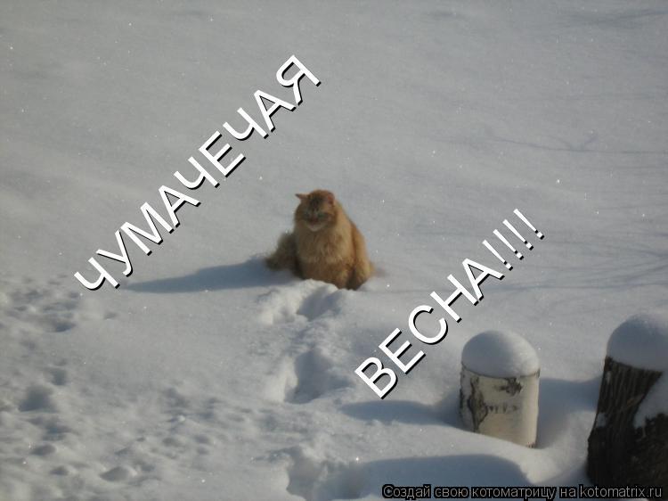 http://kotomatrix.ru/images/lolz/2011/08/26/978431.jpg