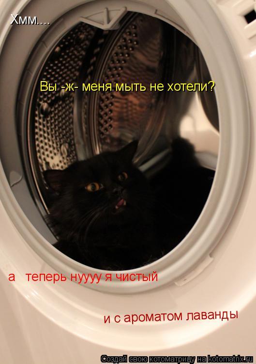 Котоматрица: Хмм.... Вы -ж- меня мыть не хотели? а   теперь нуууу я чистый  и с ароматом лаванды