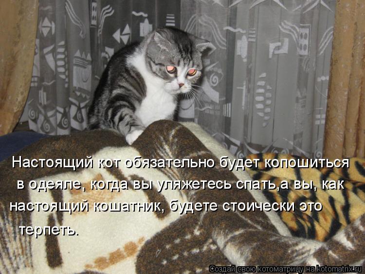 Котоматрица: настоящий кошатник, будете стоически это Настоящий кот обязательно будет копошиться  в одеяле, когда вы уляжетесь спать,а вы, как терпеть.