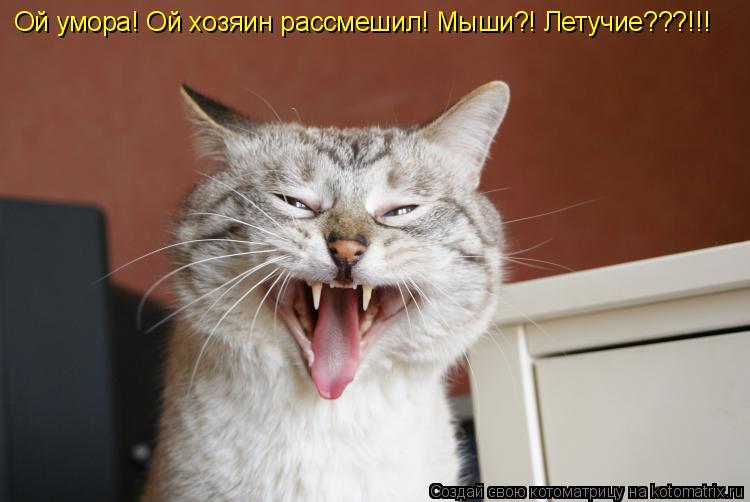 Ой умора! Ой хозяин рассмешил! Мыши?! Летучие???!!!