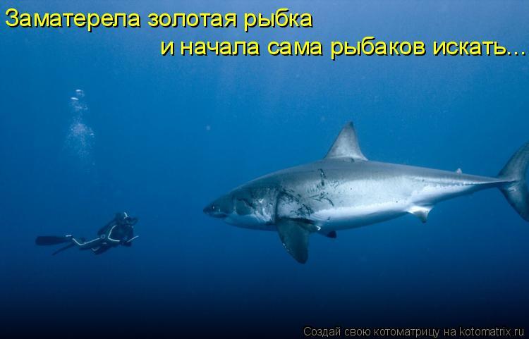 http://kotomatrix.ru/images/lolz/2011/08/26/978627.jpg