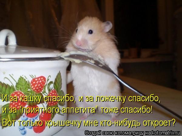 Котоматрица - И за кашку спасибо, и за ложечку спасибо,  и за