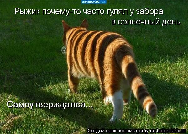 Котоматриця!)))) - Страница 8 978689