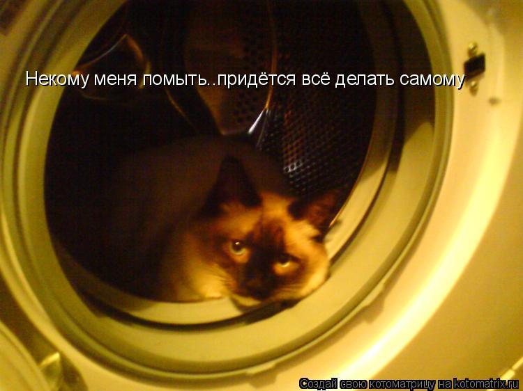 Котоматрица: Некому меня помыть..придётся всё делать самому