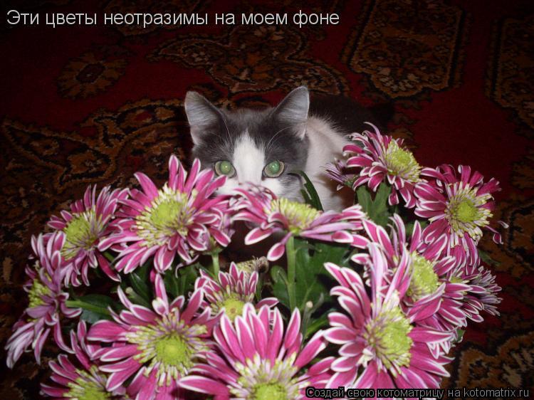 Котоматрица: Эти цветы неотразимы на моем фоне