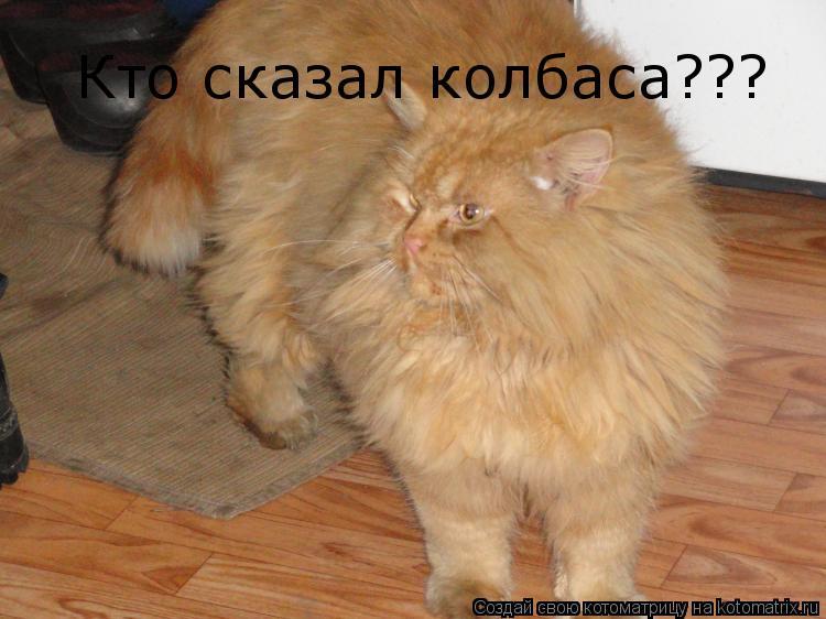 Котоматрица: Кто сказал колбаса???