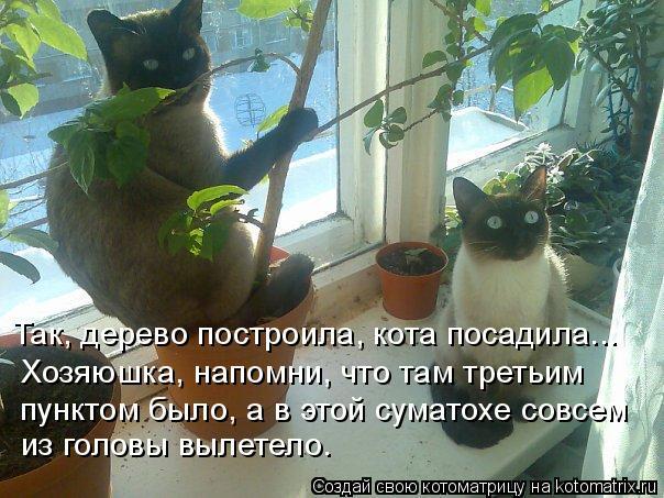 Котоматрица - Так, дерево построила, кота посадила... Хозяюшка, напомни, что там тре