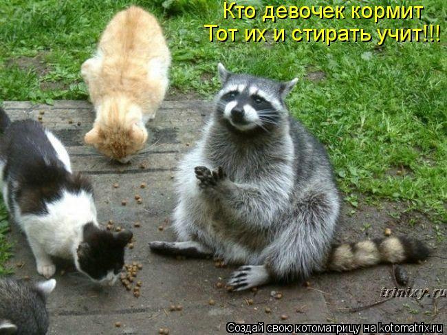 Котоматрица - Кто девочек кормит Тот их и стирать учит!!!
