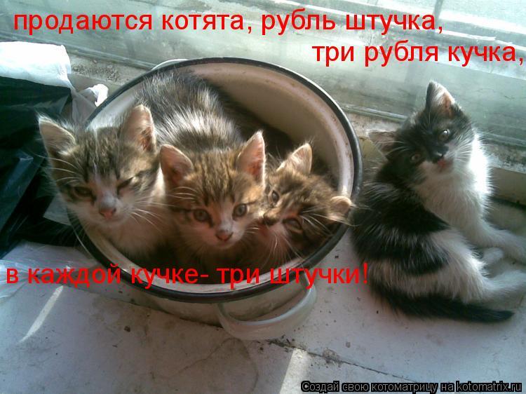 Котоматрица: продаются котята, рубль штучка,  три рубля кучка, в каждой кучке- три штучки!