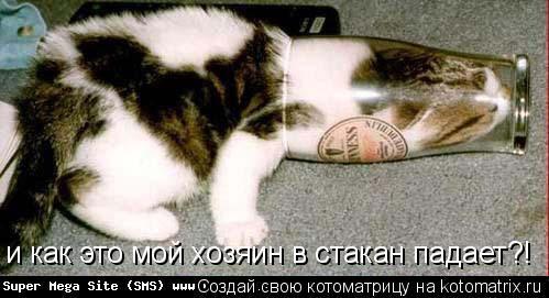 Котоматрица: и как это мой хозяин в стакан падает?!