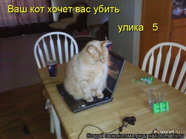 Котоматрица: Ваш кот хочет вас убить улика № 5