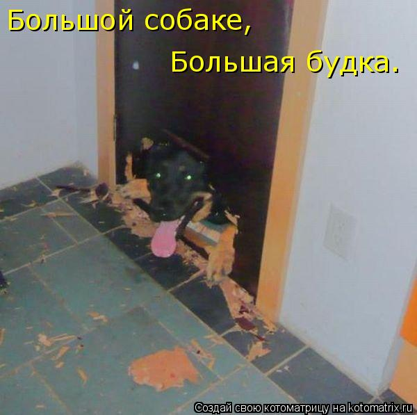 Котоматрица: Большой собаке, Большая будка.